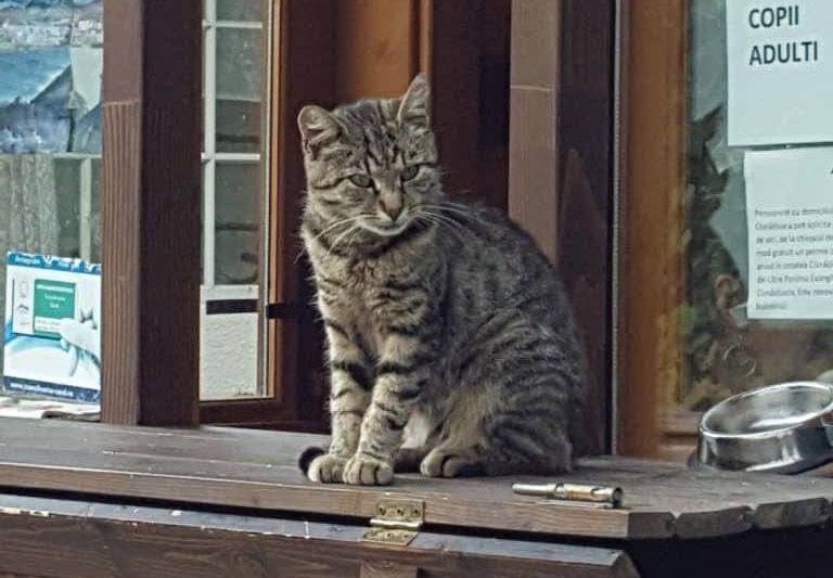 Die Katze am Fuß der Kirchenburg Stolzenburg (Slimnic)